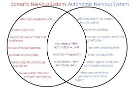Comparative Functions Of Nervous And Endocrine Systems Chart Pin On Cool Pt Geek Info