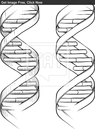 dna double helix sketch 1bdddf2 double helix coloring sheet pictures to pin on pinterest pinsdaddy on double helix coloring worksheet key