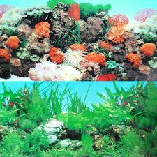 Fish Tank Amazoncom 9090 20 X 48 Double Sided Fish Tank Aquarium