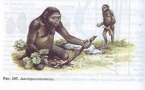 Основные стадии антропогенеза Гипермаркет знаний Древнейшие люди
