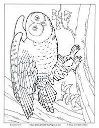 Small Picture 36 best Fun Worksheets images on Pinterest Coloring books