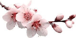 Znalezione obrazy dla zapytania gify wiosenne kwiaty