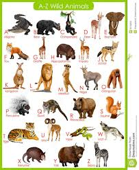 wild animals chart. Simple Animals Chart Of A To Z Wild Animals Stock Vector  Image 55756259 Intended