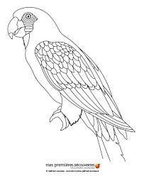 Coloriage D Un Perroquet Perroquets Costumes Et Divers S Dessin Dessin A Colorier Perroquet Ara ImprimerL