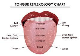 Tongue Reflexology Chart Download Free Vectors Clipart