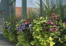 Small Picture Design Full Sun Perennials Container Gardening Ideas For Full Sun