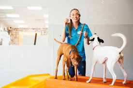 At dogtopia®, we're a unique breed. Award Winning Dog Daycare Dogtopia