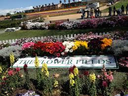 flower field sign