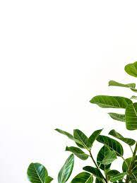 Plants with White Backgrounds