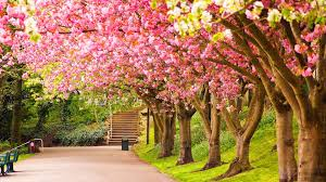 spring nature background hd. Perfect Nature 10 HD Nature Wallpapers With 19201080 Pixels 2 Pink Blossoms  Desktop Wallpaper Throughout Spring Background Hd R