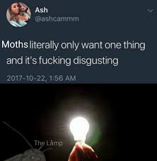Moth Memes Are On The Rise The Låmp Is Heating Invest