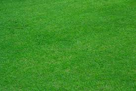 green grass soccer field. Download Green Grass Background Of Soccer Field Stock Photo - Image Land, Pattern: A