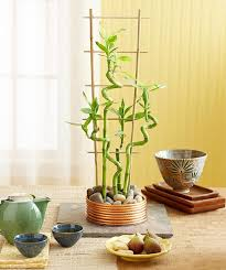 Small Picture Top 25 best Indoor bamboo plant ideas on Pinterest Growing