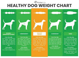 Why Is My Dog So Fat How To Keep Your Dog Slim And Healthy
