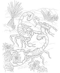 Small Picture Desert Animal Book Printable Coloring Coloring Pages