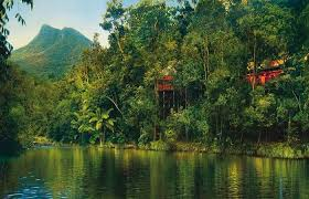 Canopy Treehouses Stay In A Treehouse In The Rainforest Find Out The Canopy Treehouses