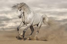 horses wallpaper hd. Modren Wallpaper White Horse Wallpaper 7296x4864 On Horses Hd P