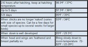 Chick Temperature Chart Brooder Temperatures For Birds