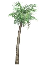 palm tree wall stickers: arecaceae palm tree sticker grass wall