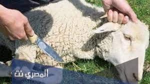 ما هي شروط المضحي لغير الحاج - المصري نت