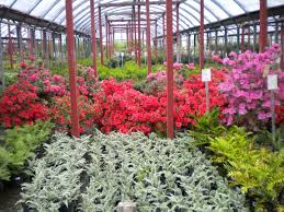 stringer nursery has been tulsa s favorite nursery and garden center since 1957 we here at stringer nursery strive to provide the best service with