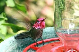 fascinating glass bottle hummingbird feeders hummingbird feeder nectar hummingbird feeder kit includes best 1 8 oz
