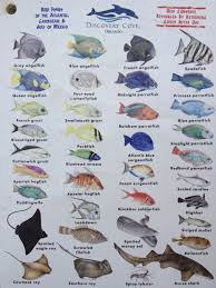 Lanzarote Fish Chart Second Page Of The Chart Showing Fish You Can See In The