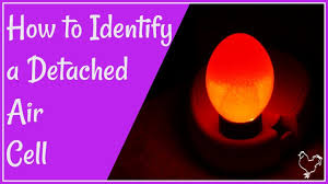 A Detached Air Cell In A Chicken Egg How To Identify During Incubation