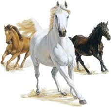 """Résultat de recherche d'images pour """"gifs animés chevaux gratuits"""""""