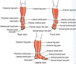 Leg Ankle Foot The Trigger Point Referred Pain Guide