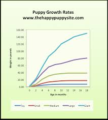 Toy Dog Growth Chart Puppy Development Stages With Growth Charts And Week By Week