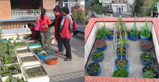urban agriculture as a climate change