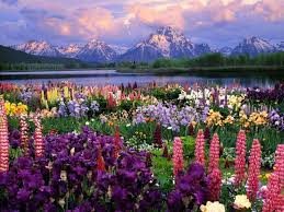 Small Picture Colorful Lupines Adding Character to Flower Garden Design and Yard
