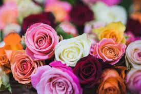 diy wedding flower preservation and pressing