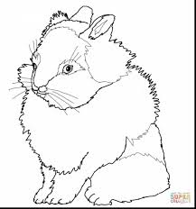 beautiful lionhead rabbit coloring pages with bunny coloring page ...