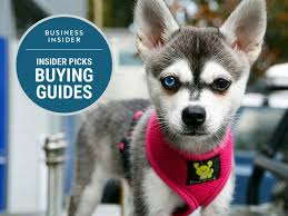 best dog harness 4x3