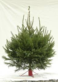 How To Buy An Artificial Christmas Tree  Christmas Tree MarketTypes Of Fir Christmas Trees