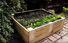 how to make a raised garden. Exellent How Transplant Seedlings To Raised Bed  How Make Garden Beds A  Practical On D