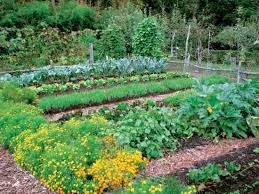 Growing Fall Vegetables In South Carolina  LoveToKnowFall Garden Crops