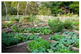 a raised bed for vegetable gardening