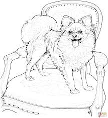 Small Picture Papillon coloring page Free Printable Coloring Pages