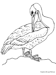Small Picture Brown pelican coloring page Coloring Pages Plus Ariel