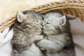 「子猫」の画像検索結果