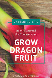 How To Take Care Of Dragon Fruit Tree