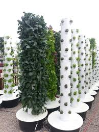 hydroponic vertical garden. Vertical Garden With Hydroponics In Summerland Hydroponic