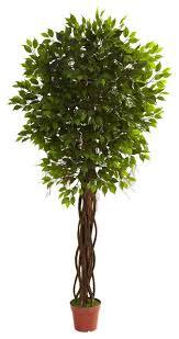 7 5 ficus tree uv resistant indoor or outdoor