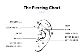 Piercing Chart Everything You Need To Know About Conch Piercings