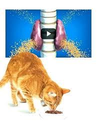 k d cat food alternative. Beautiful Alternative Hills Kd Cat Food Alternatives K D Ratings  Dry   And K D Cat Food Alternative