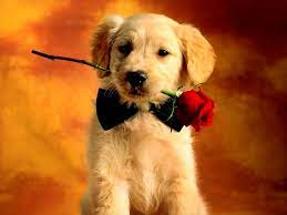 Valentine Puppy Wallpapers - Top Free ...