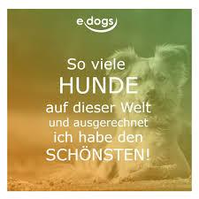 Hundeliebe Edogs Traumhund Hundezitate Hundemensch